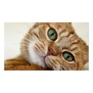 Gatito anaranjado grande tarjetas de visita