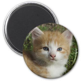 Gatito anaranjado hermoso del Tabby Imán Redondo 5 Cm