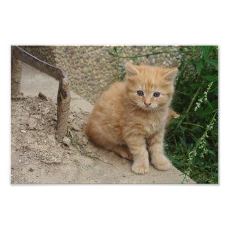Gatito anaranjado hermoso del Tabby Arte Fotográfico