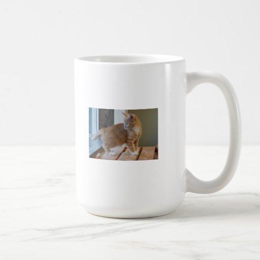 Gatito anaranjado lindo taza