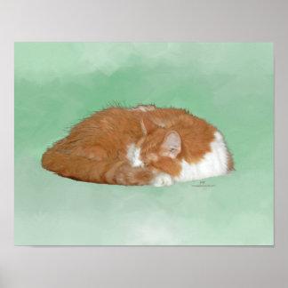 Gatito anaranjado Napping Póster