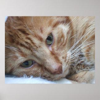 Gatito anaranjado póster