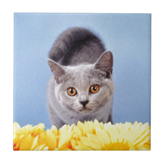 Gatito azul azulejo cuadrado pequeño