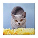 Gatito azul teja  ceramica