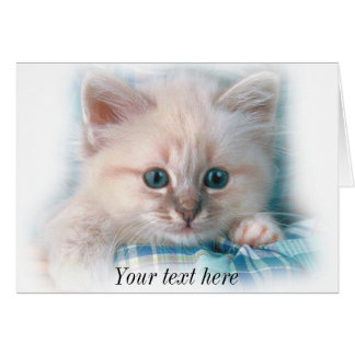gatito blanco lindo con los ojos azules magníficos tarjeta