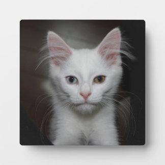 Gatito blanco placas de madera