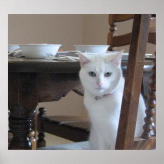 Gatito blanco póster