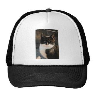 Gatito blanco y negro del smoking gorros bordados