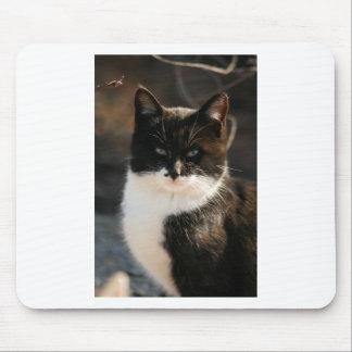 Gatito blanco y negro del smoking alfombrillas de raton