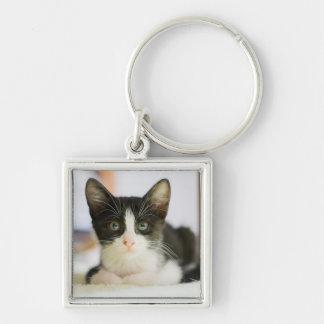 Gatito blanco y negro dulce llavero cuadrado plateado
