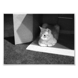 Gatito blanco y negro en una caja de cartón fotografías