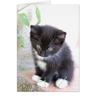 Gatito blanco y negro felicitación