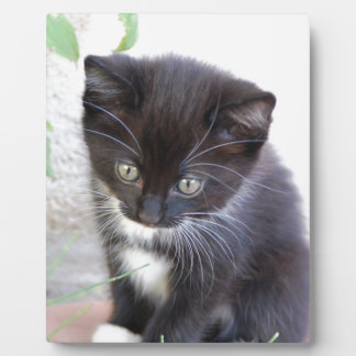 Gatito blanco y negro placas con foto