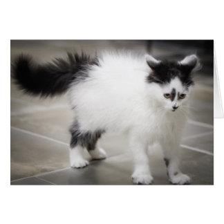 Gatito blanco y negro tarjeta de felicitación