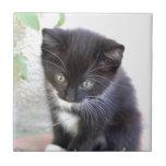 Gatito blanco y negro tejas
