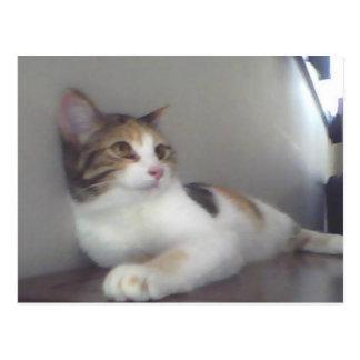 Gatito bonito del calicó postal
