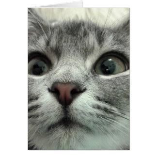 Gatito bonito, Gute Besserung Tarjeta Pequeña