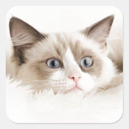 Gatito bonito pegatina cuadrada