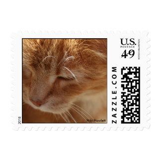 Gatito bonito por los sellos de Niki