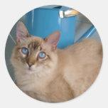Gatito bonito por watercan etiquetas redondas