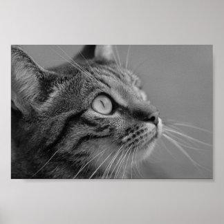 Gatito bonito póster