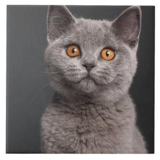 Gatito británico de Shorthair (3 meses) Azulejo Cuadrado Grande
