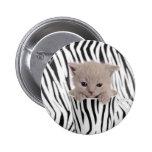 Gatito británico del shorthair en taza pins