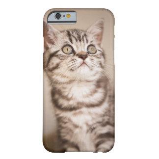 Gatito británico gris lindo del pelo corto (Tabby Funda Barely There iPhone 6
