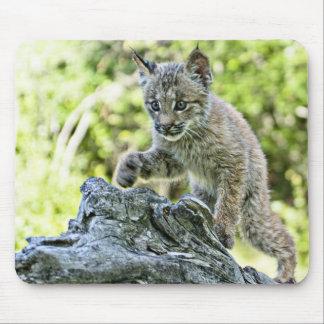 Gatito canadiense del lince en el vagabundeo alfombrillas de ratones