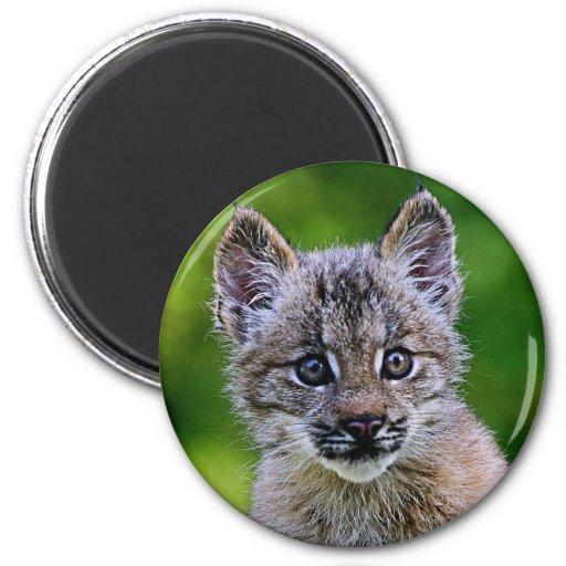 Gatito canadiense del lince imán redondo 5 cm
