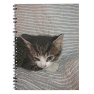 Gatito cansado libros de apuntes con espiral