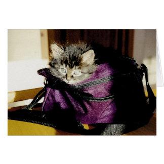 Gatito completamente despierto en un monedero de tarjeta de felicitación