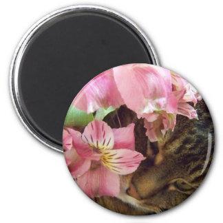 gatito con el imán de las flores