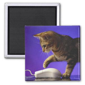 Gatito con el ratón del ordenador imán cuadrado