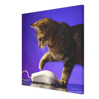 Gatito con el ratón del ordenador lienzo envuelto para galerias