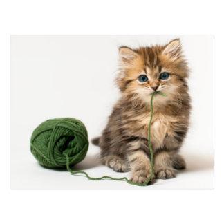 Gatito con hilado verde postal