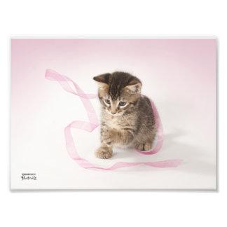 Gatito con la cinta fotografías