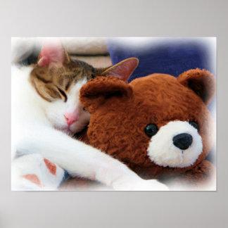 Gatito con la impresión del oso de peluche