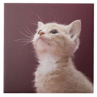 Gatito con las barbas azulejo cuadrado grande