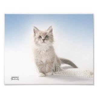 Gatito con las perlas impresiones fotográficas