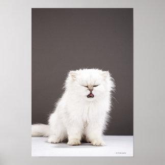 Gatito con los ojos cerrados impresiones