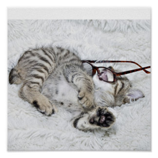 Gatito con los vidrios poster
