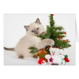 Gatito con un árbol de navidad tarjeta de felicitación
