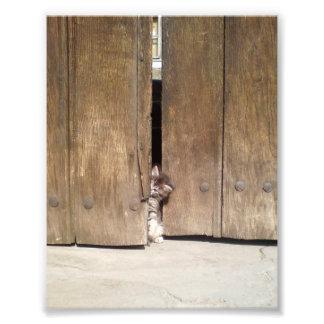 Gatito curioso impresiones fotográficas
