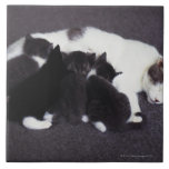 gatito de alimentación del gato azulejo cuadrado grande