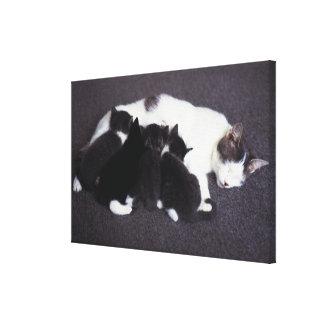 gatito de alimentación del gato impresiones de lienzo