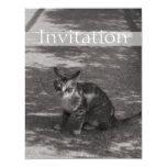 Gatito de B&W Invitación 10,8 X 13,9 Cm