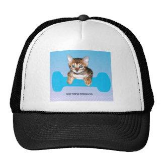 Gatito de Bengala con el azul de la pesa de Gorras