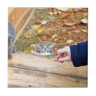 Gatito de dos desamparados que juega con un azulejo cuadrado pequeño