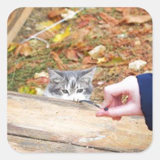 Gatito de dos desamparados que juega con un pegatina cuadrada